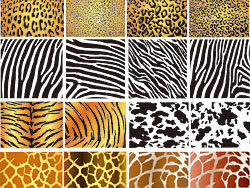 Texture pattern animal vector-th