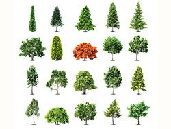 Trees vector design collection-thu