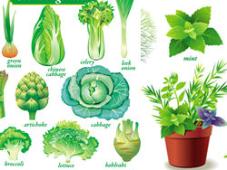 Vector delicate green vegetables