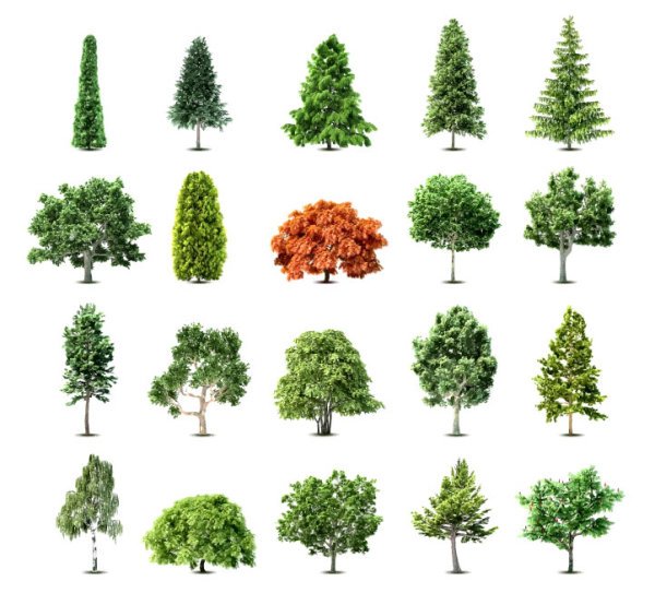 Trees vector design collection